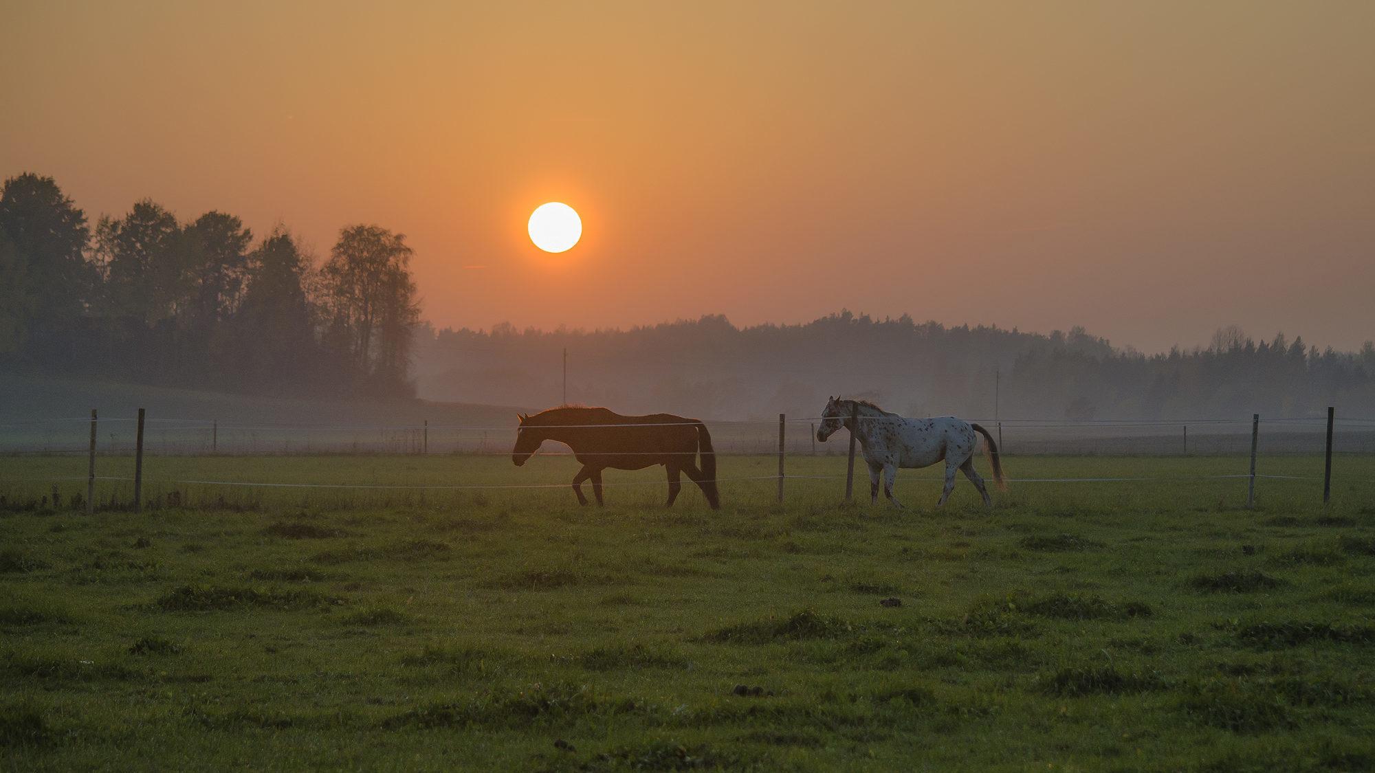 Auringonlasku © Kinttu Koipijärvi